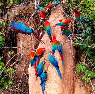 THE BEST OF PERU: AMAZONAS, MACHUPICCHU AND TITIKAKA LAKE